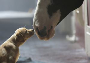 Budweiser_dog_superbowl_ads_2015